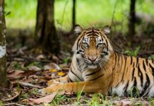 Technology for Tiger India
